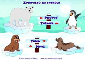 Zvieratká na kryhách - Tučniak, tuleň, mrož a ľadový medveď